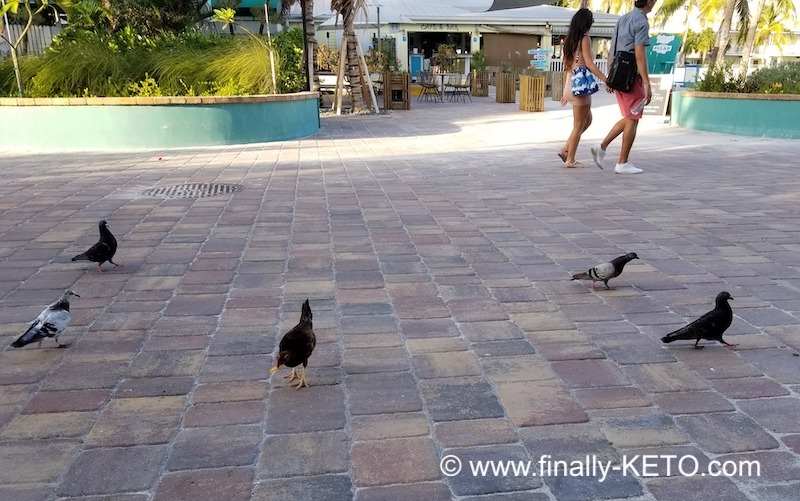 Feeding the chicks and birds with fries at Southernmost Beach Cafe, Key West